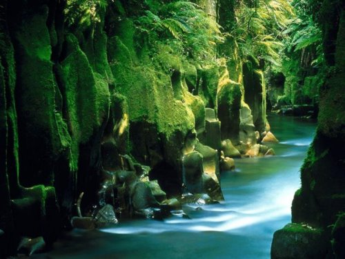 new-zealand-30-photos- (14)