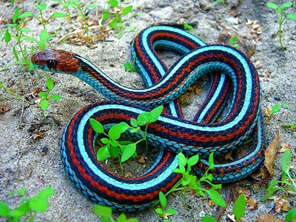 35-snakes-pictures- (1)