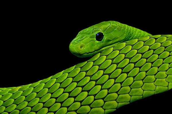 35-snakes-pictures- (16)