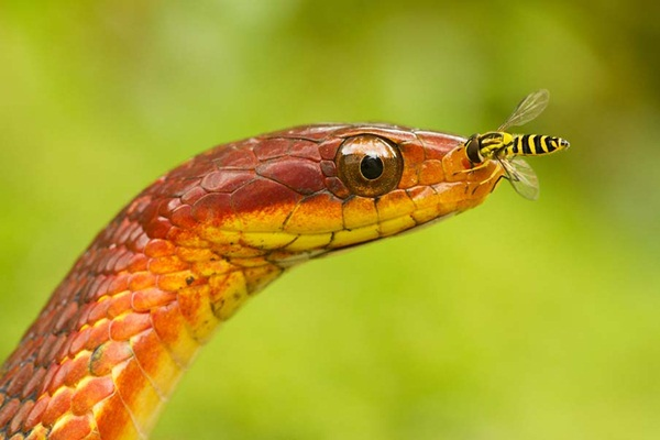 35-snakes-pictures- (24)
