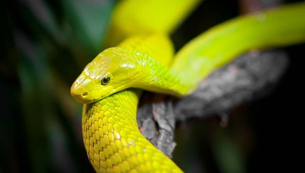 35-snakes-pictures- (26)