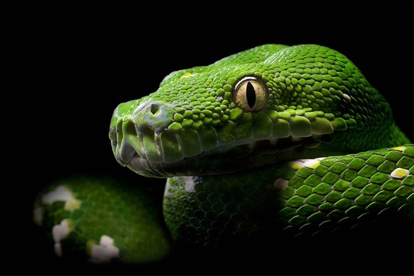 35-snakes-pictures- (27)
