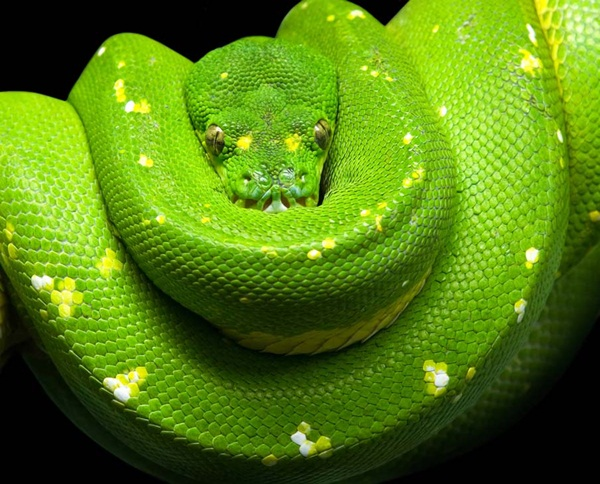 35-snakes-pictures- (28)