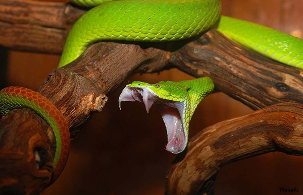 35-snakes-pictures- (32)