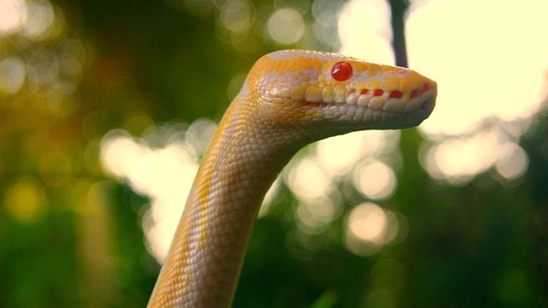 35-snakes-pictures- (35)