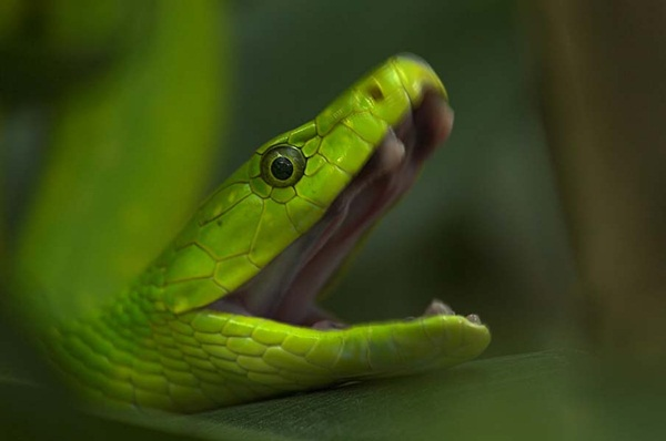 35-snakes-pictures- (5)
