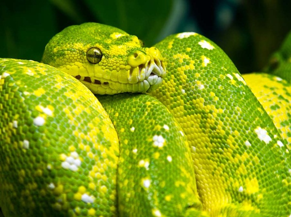 35-snakes-pictures- (8)