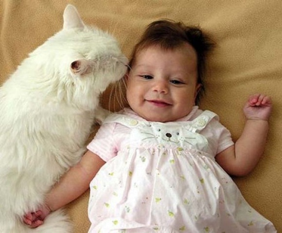 babies-and-cats- (1)