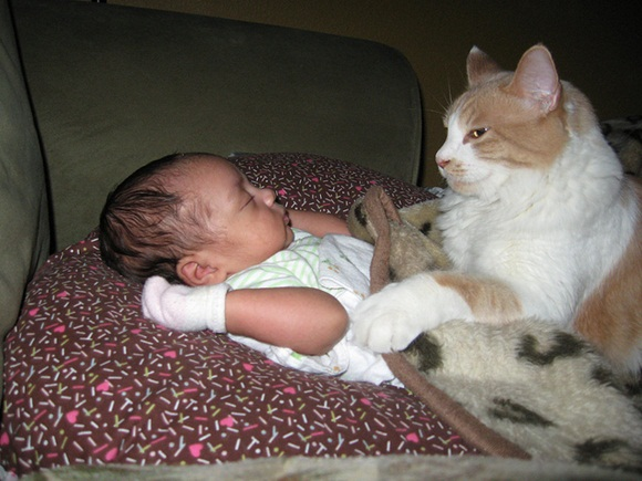 babies-and-cats- (10)