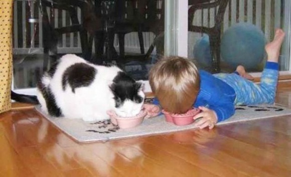 babies-and-cats- (15)
