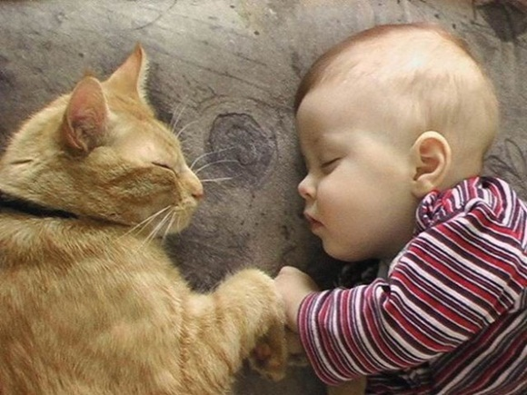 babies-and-cats- (18)