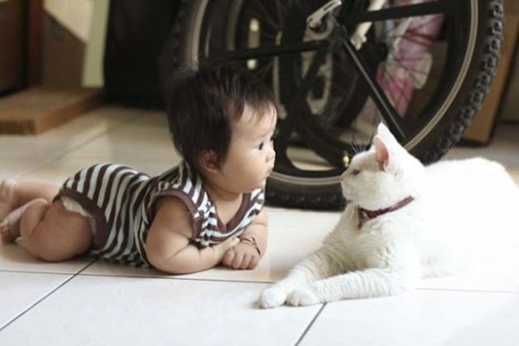 babies-and-cats- (20)