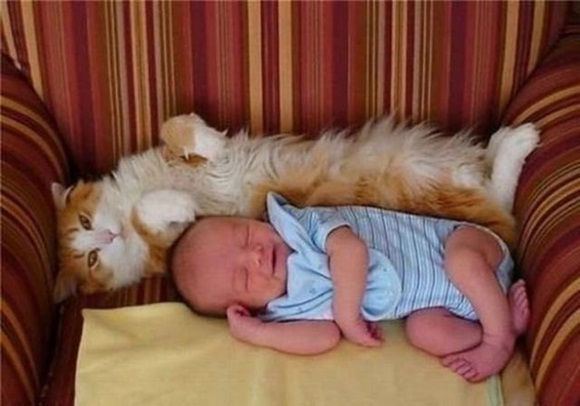 babies-and-cats- (23)