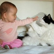 Cute Babies and Cats