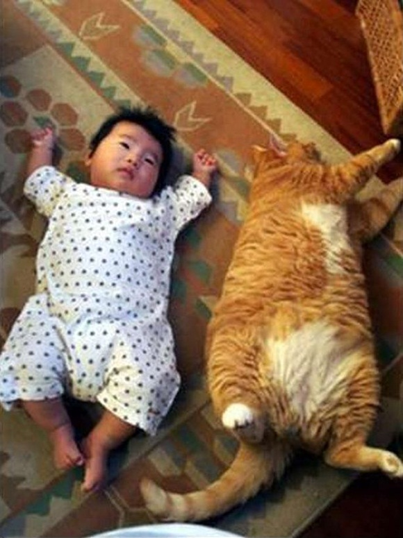 babies-and-cats- (8)