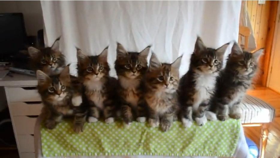 kitten-with-reflexes-