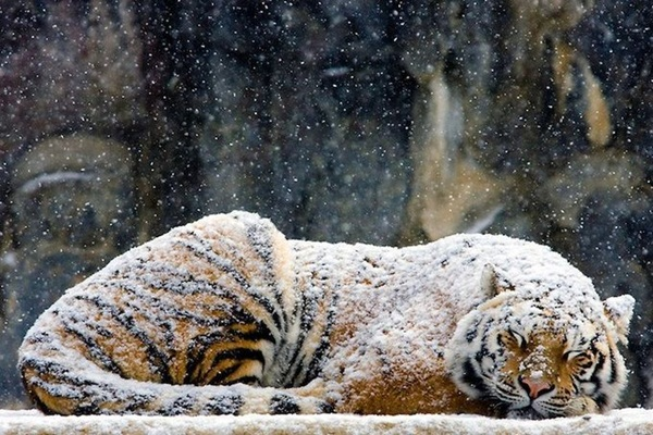 animals-in-snow- (1)