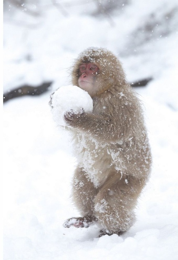 animals-in-snow- (10)
