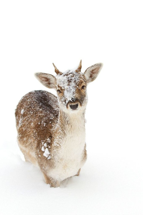 animals-in-snow- (12)