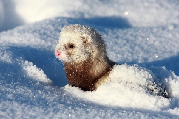 animals-in-snow- (13)
