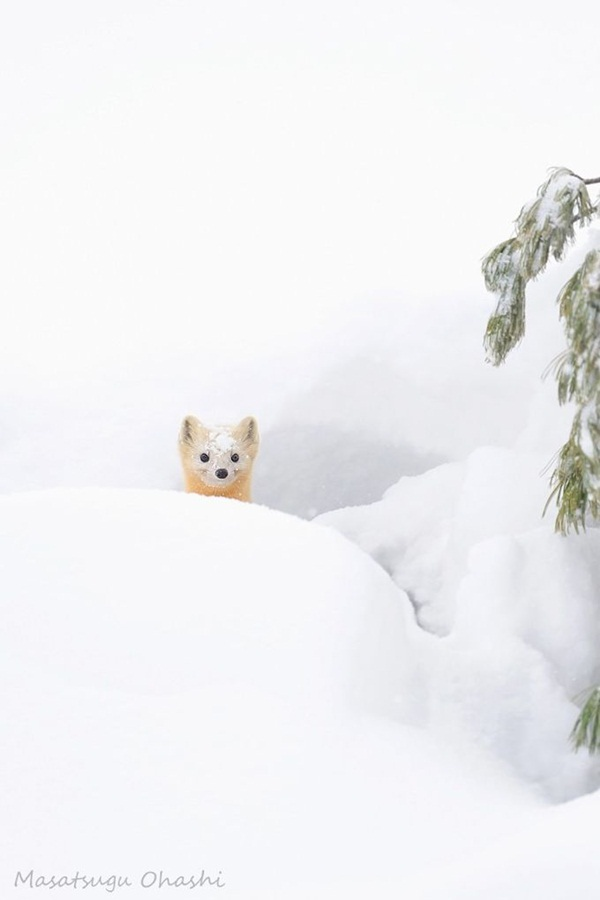 animals-in-snow- (16)