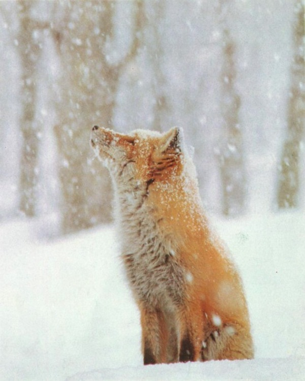 animals-in-snow- (19)