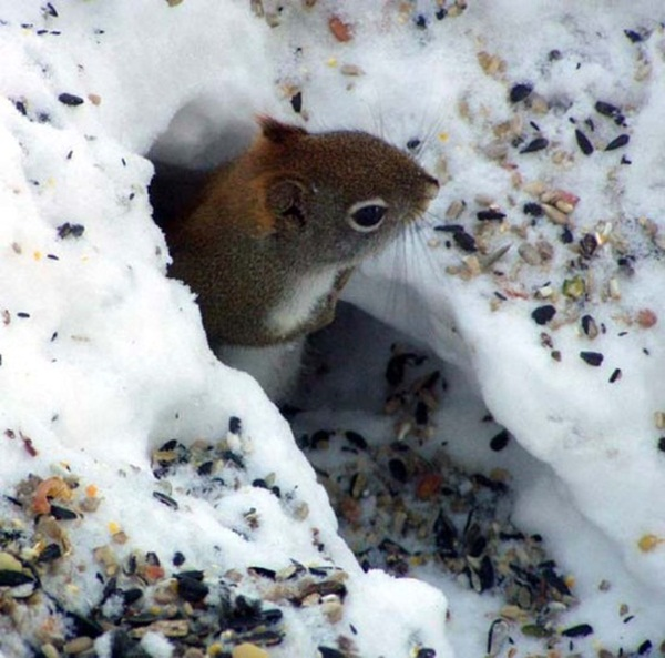 animals-in-snow- (20)