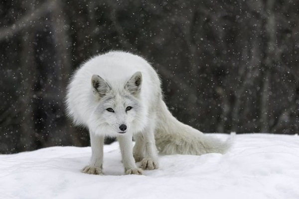 animals-in-snow- (4)