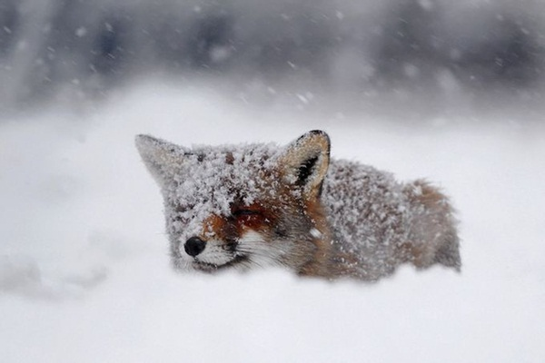 animals-in-snow- (9)