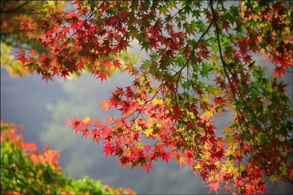beautiful-autumn-20-pictures- (17)