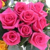 Best Roses (26 Photos)