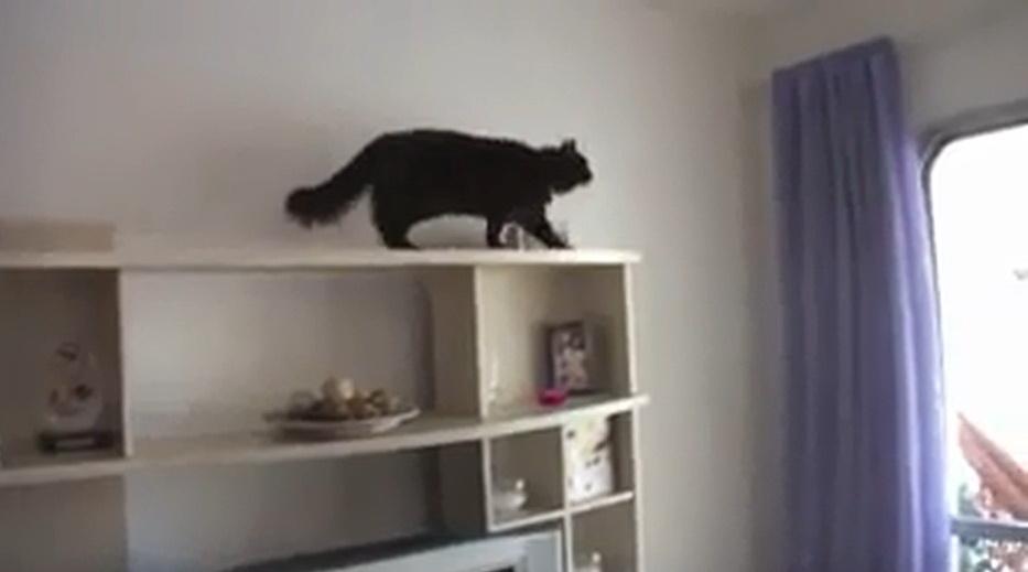 mission-impossible-cat-video-