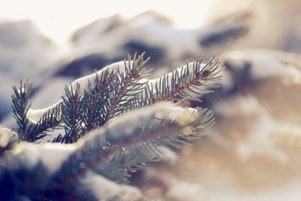 26-winter-photos- (15)