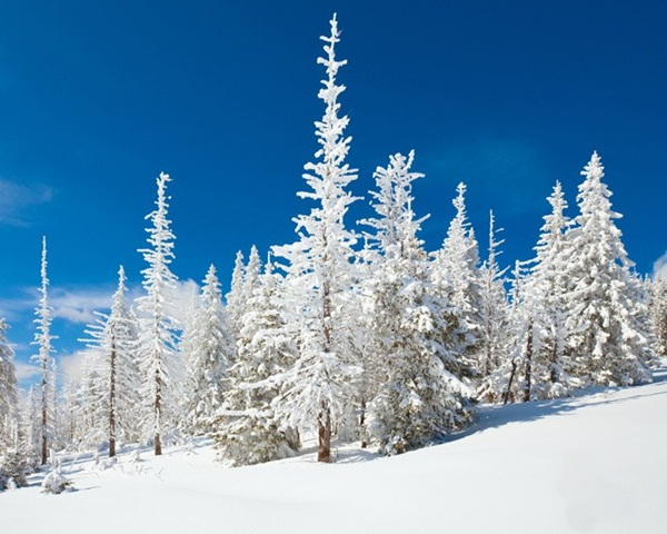 26-winter-photos- (8)