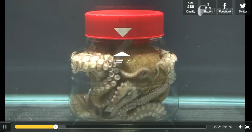 ability-of-octopus-video-