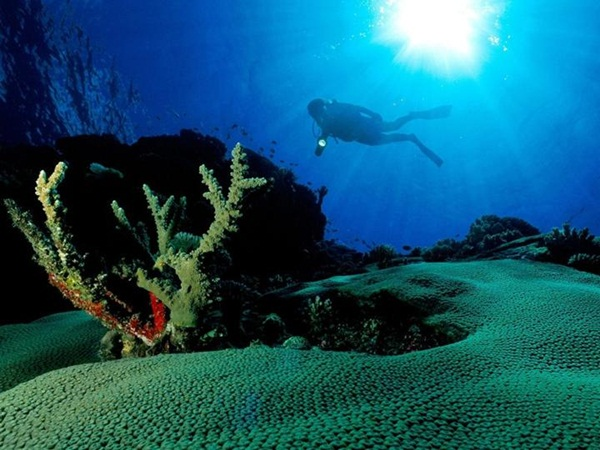 underwater-photos- (16)
