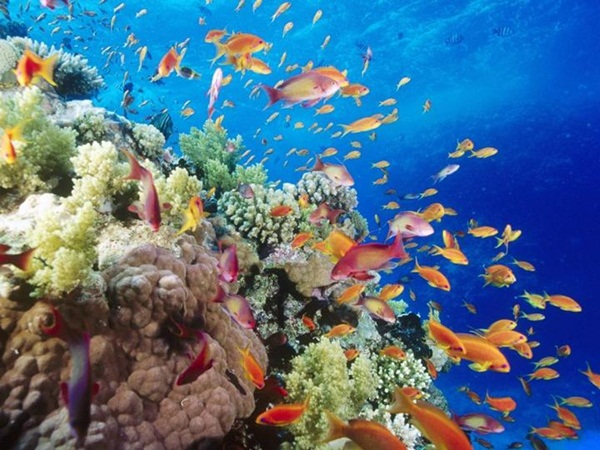 underwater-photos- (18)