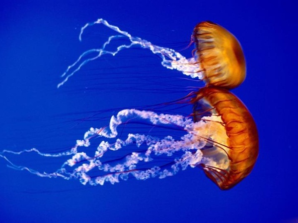underwater-photos- (19)
