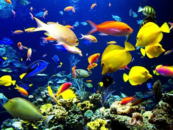 underwater-photos- (27)