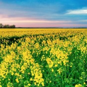 Lovely Spring Wallpapers (15 Photos)