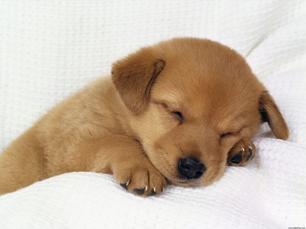 animals-sleeping-28-photos- (13)