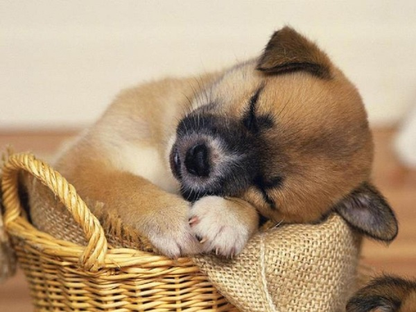 animals-sleeping-28-photos- (17)