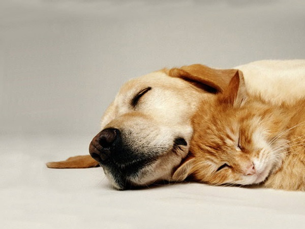 animals-sleeping-28-photos- (2)