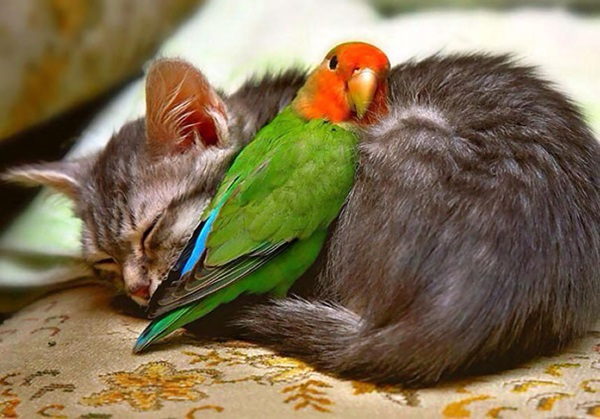 animals-sleeping-28-photos- (27)