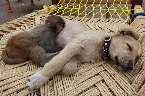 animals-sleeping-28-photos- (6)