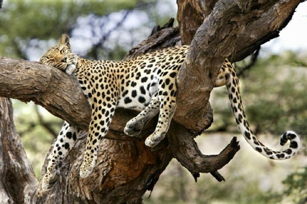 animals-sleeping-28-photos- (7)