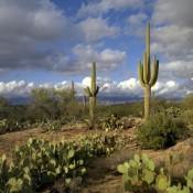 Beautiful Pictures Of Arizona USA  (56 Photos)
