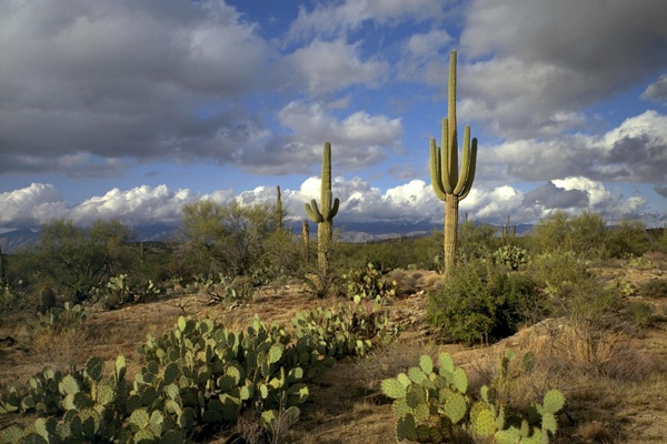 arizona-usa-photos- (50)