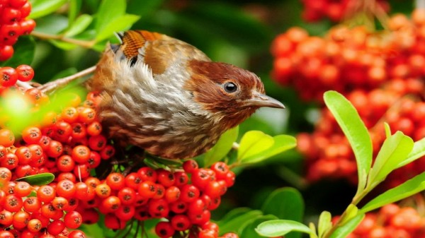 Beautiful Birds Wallpaper (20 Photos)