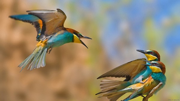 birds-wallpaper-20-photos- (10)
